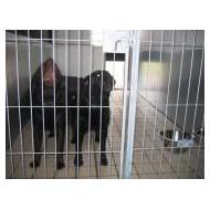 Hundepension for 3 hunde i samme boks